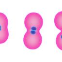 Znanost med knjigami: Zdravljenje z matičnimi celicami