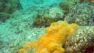 BIOGENIC FORMATION IN THE SLOVENIAN SEA, Lovrenc Lipej, Martina Orlando -Bonaca, Borut Mavrič
