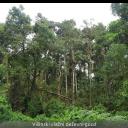 Timotej Turk Dermastia: Skrivnosti, posebnosti in lepote tropskih ekosistemov na Kostariki