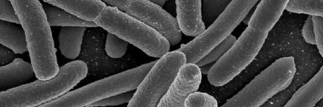 prof. dr. Ivan I. Smalyukh: Popotovanje z bakterijami