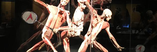 Body worlds: razstava človeških teles