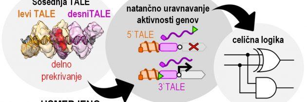 TALE zna nove trike: raziskovalci razvili nov način uravnavanja delovanja genov