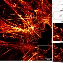 prof. dr. Janez  Štrancar: STED mikroskopija – mogočno orodje za sledenje (supra)molekularnim dogodkom
