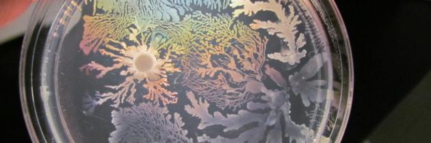 ZnC: Klepetavi mikrobi