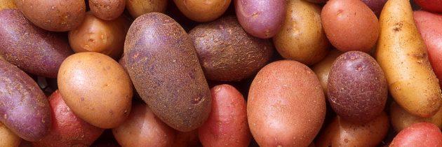 Virus, ki lahko uniči celoten pridelek krompirja