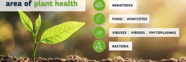 NIB imenovan za prvi Evropski referenčni laboratorij za povzročitelje bolezni rastlin