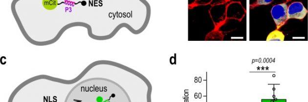 Raziskovalci Kemijskega inštituta razvili orodja za izboljšano uravnavanje človeških celic