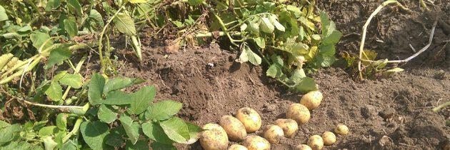 Super Krompir