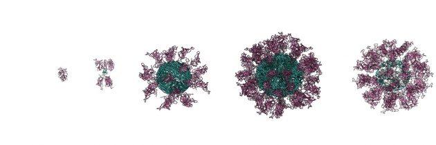 Kemijski inštitut (KI) z inovativno metodo v razvoj  cepiva Covid-19