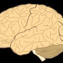 Ali lahko SARS-CoV-2 okuži nevrone in poškoduje možgansko tkivo?