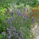 Biodiverziteti najbolj prijazen vrt