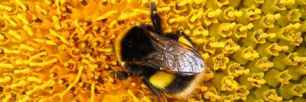 Ob svetovnem dnevu čebel