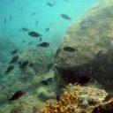 """8. junij je Svetovni dan oceanov """"Ocean: življenje in preživetje"""""""